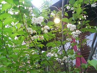 コモド前の花