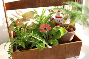 ミニ植物たちを一緒に♪