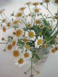 カワイイ小さいお花♪