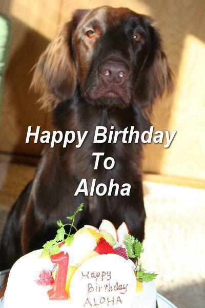 11.8-aloha.jpg