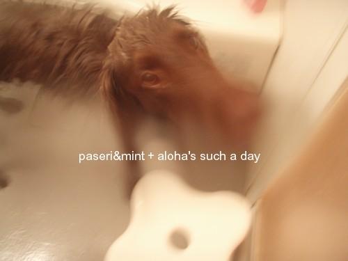 お風呂でちゅ2