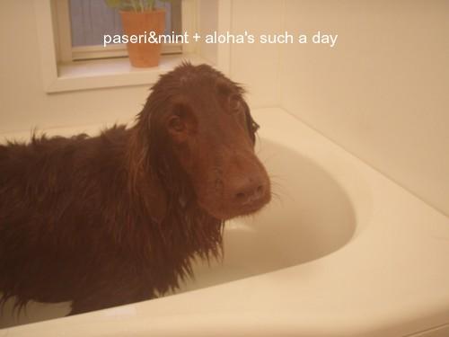 お風呂でちゅ