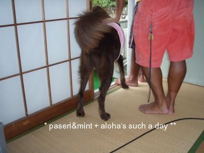 お部屋aloha