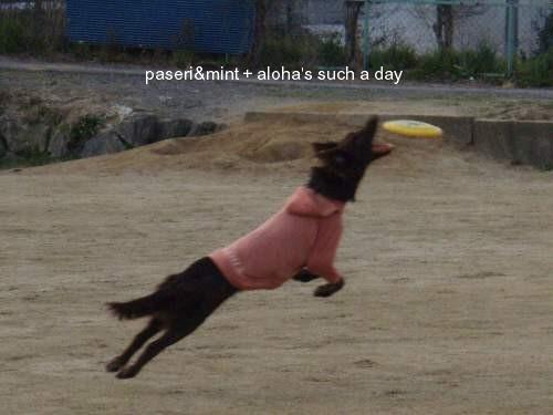 aloha-d.jpg