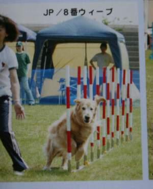 dogspo4.jpg