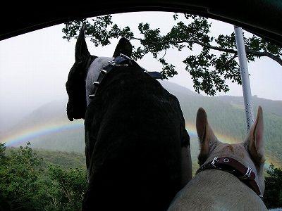 『虹がキレイなり!』 『でちゅ!』