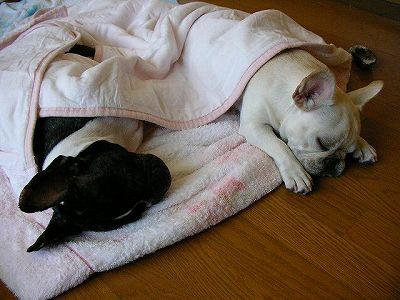 眠るパトポル