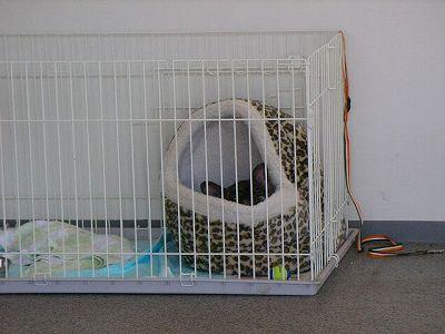 ベッドのうめちゃん