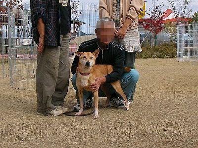 柴犬MIXちゃん