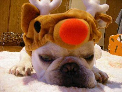 『メリークリスマスでちゅ♪』