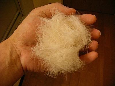 山盛りの毛