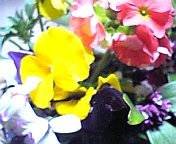 20060329181810
