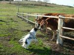 牛さんこんにちは!