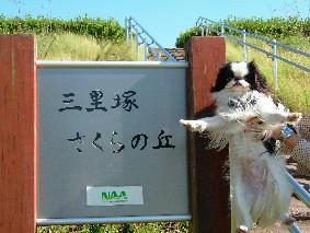sakuraoka