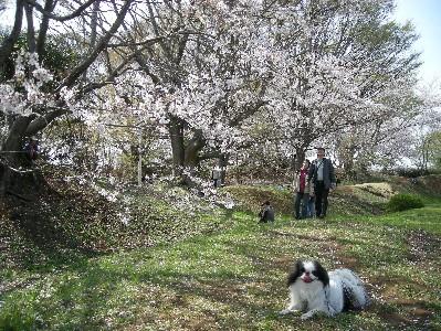 桜とぺん太