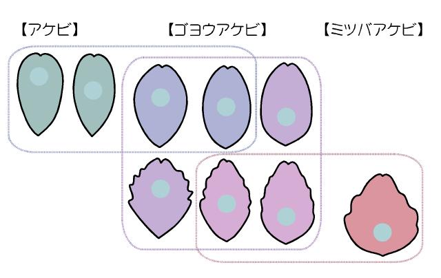 図:アケビ類の葉
