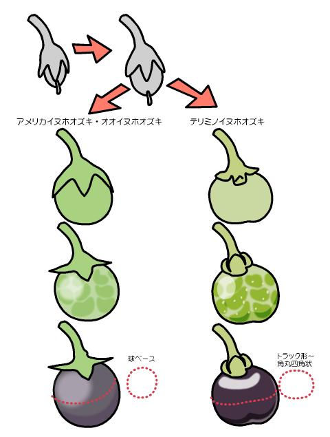 テリミノイヌホオズキ 果実の変化