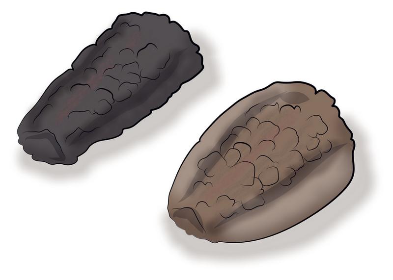 アメリカタカサブロウ タカサブロウ 痩果比較