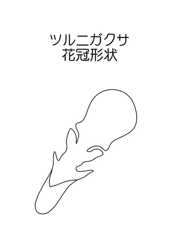 ツルニガクサ 花冠の図