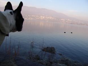 Lago di Varese genaio08