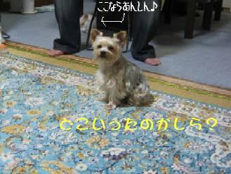 20060915151145.jpg