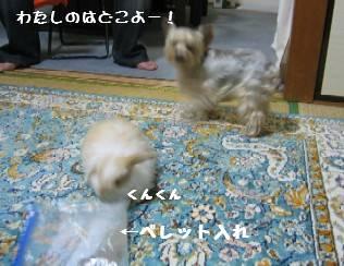 20060915152354.jpg