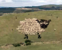 Extreme Sheep LED Art