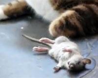 猫vsねずみ
