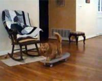 スケボーをする猫
