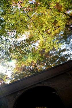 橋の下からの紅葉