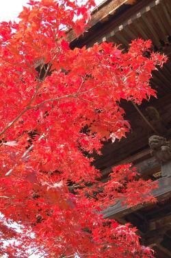 善光寺周辺の紅葉