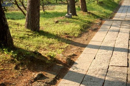 #006 松の木が待つもの