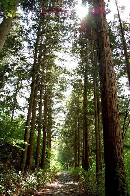 #002 立ち並ぶ木々