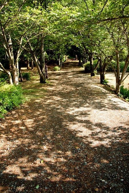 #004 木の中の道
