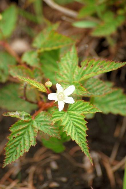 #001 小さな白い花