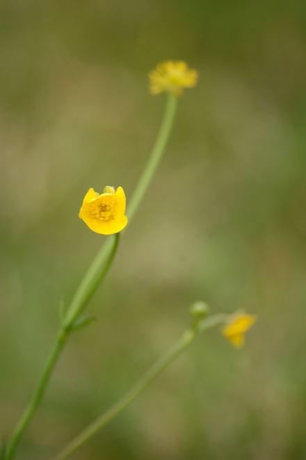 #005 黄色い花