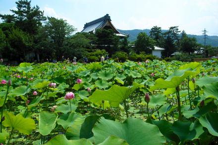 #004 蓮の池