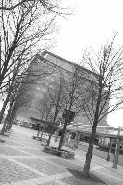 #001 冬の木