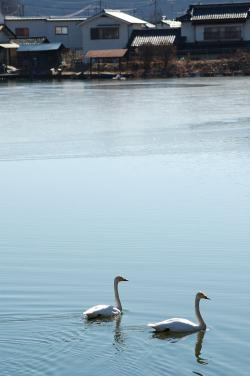 #003 住宅街の池