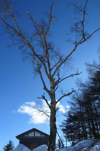 #002 何の木?