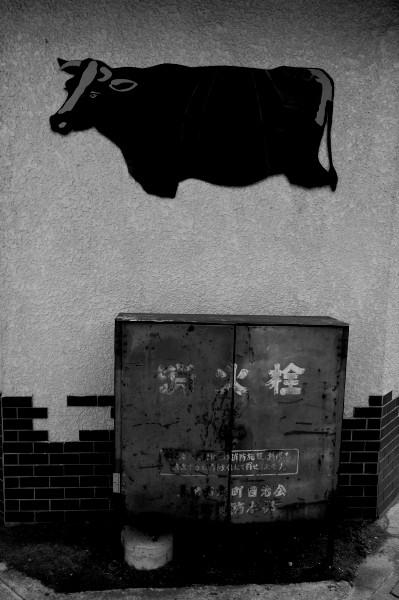 #003 牛と消火栓