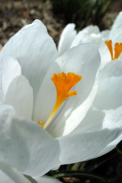 #001 白い花