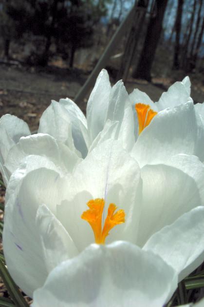 #002 白い花