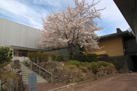 #001 城山の桜