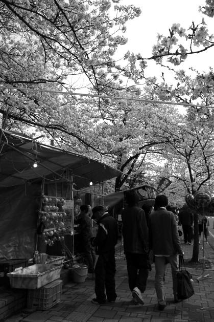 #003 花見♪(モノクロ)