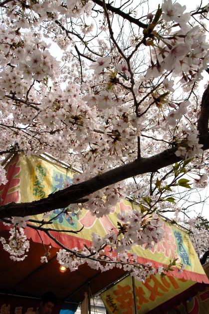 #004 花見♪