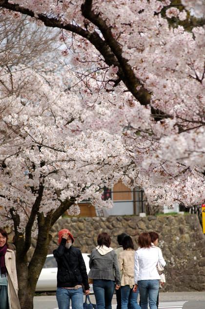 #002 桜道