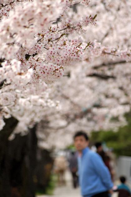 #003 桜道