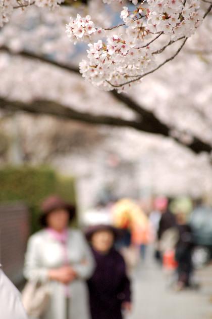 #001 桜色々