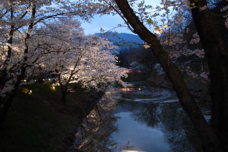 #001 お堀の周りに咲く桜